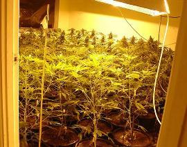 More Charged Following Cannabis Factory Find