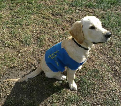 Atherton Guide Dog Training School