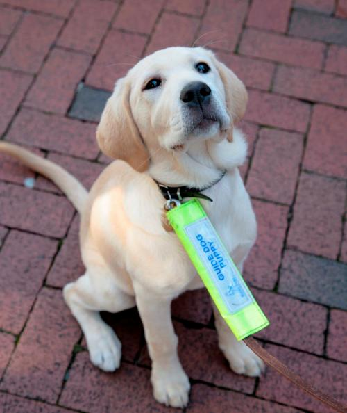 Stop Dogs From Eating Poop Petsmart