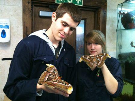 Thomas Burt and Gemma Douch (Year one students, Extended Diploma in Animal Management) pictured with the Atlas Moths (Attacus Atlas) from Southeast Asia