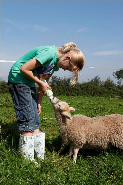 Open Farm Sunday 17 June