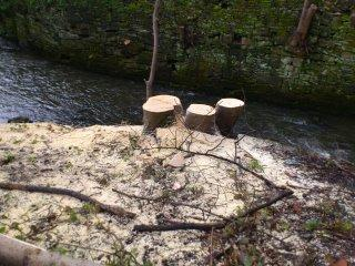 Tree stumps in Helmshore