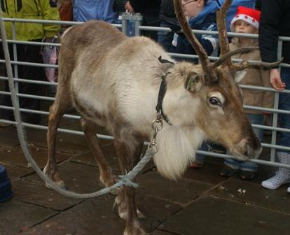 Reindeer in Ramsbottom