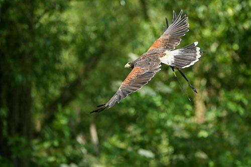 Worrying signs that incidents of birds of prey being killed or injured could be on rise.
