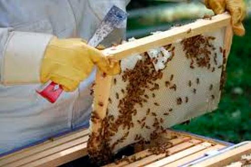 Busy Bees, Local Honey … and life in a Northants Apiary!