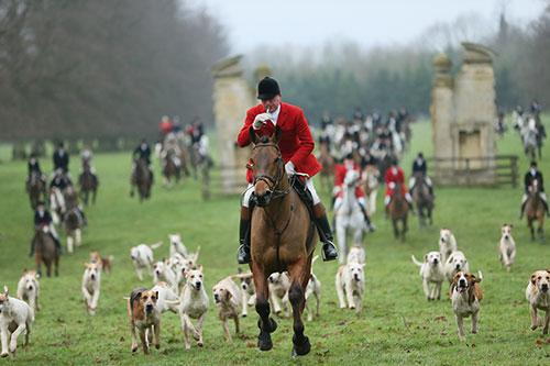 Huntsman Mick Wills of the Grafton Hunt brings the hounds up towards Easton Neston House