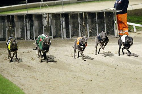More People Are Set To Watch The Greyhound Derby Live Than Ever Before