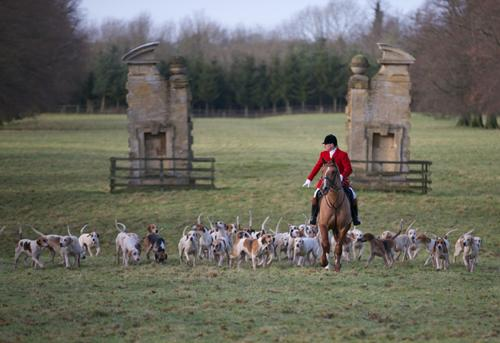 Grafton Hunt at Easton Neston on Boxing Day 2012 led by Huntsman Mick Wills