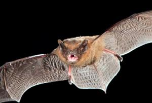 Bat Walk Saturday 4th May 2019 Free evening event from 8.30pm