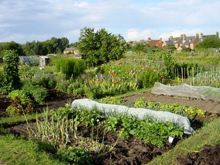 allotments walton on the hill