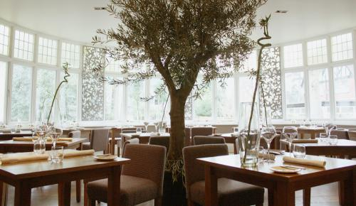 Olive tree at The Green Room Restaurant at The Green House