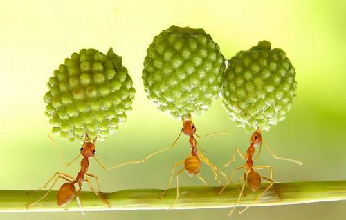 Employment Law article image of ants at work