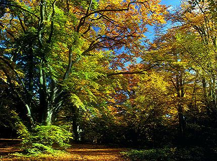 Epping Forest in autumn