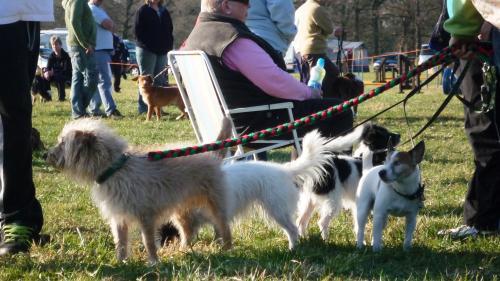 Related Pictures dog agility http xirygymurym herobo com agility ...