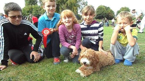 Molly the Cavapoo won Best in Show at the Stanney Fields Fun Dog Show