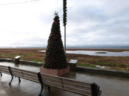 Parkgate Christmas Tree