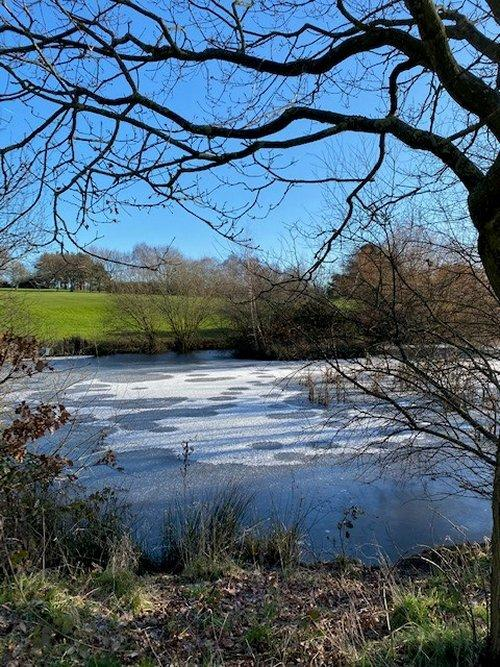 Icy pond at Heswall Golf