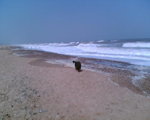 A Dog on Hornsea Beach