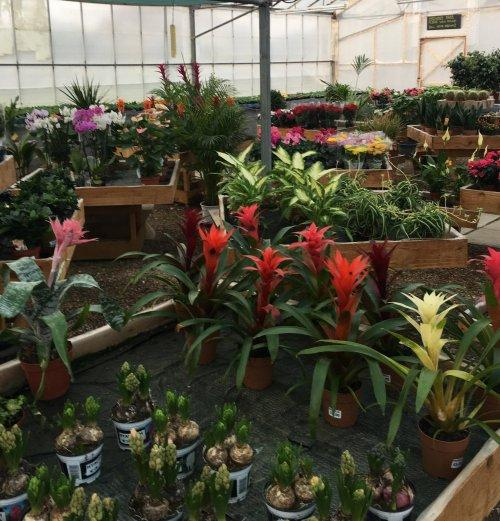 Marsh Nurseries, Parkgate
